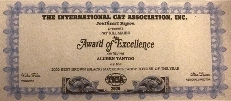 Aluren Toygers TICA Award